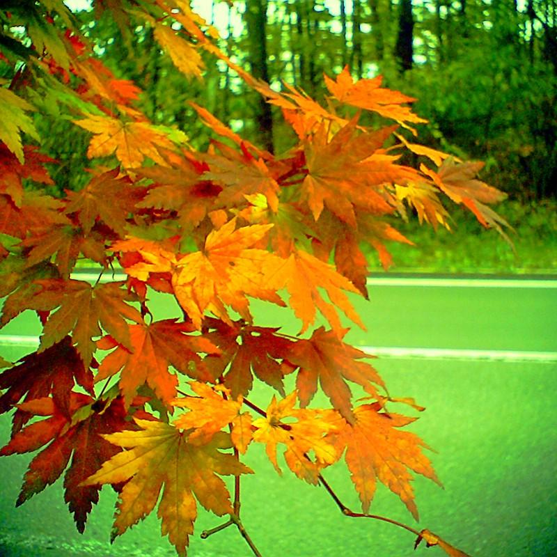 秋の追憶4