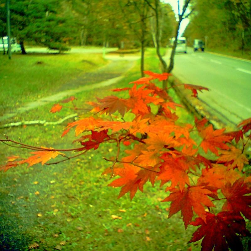 秋の追憶6