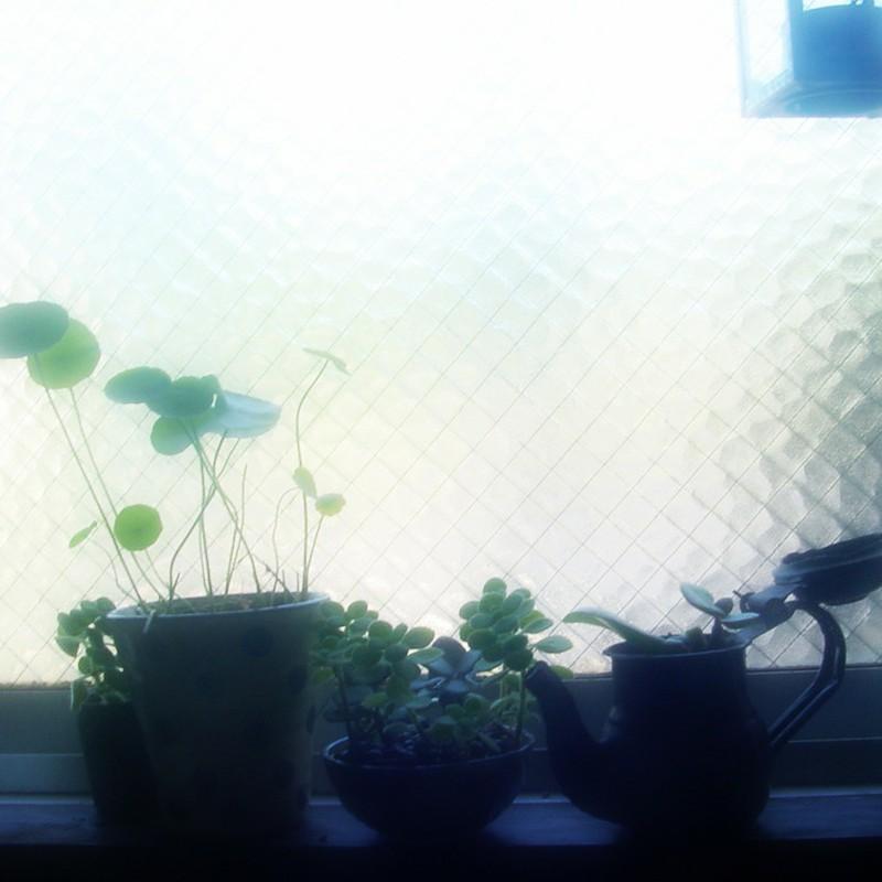 朝 キッチン 窓辺