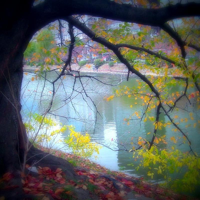 木 水 不思議の窓