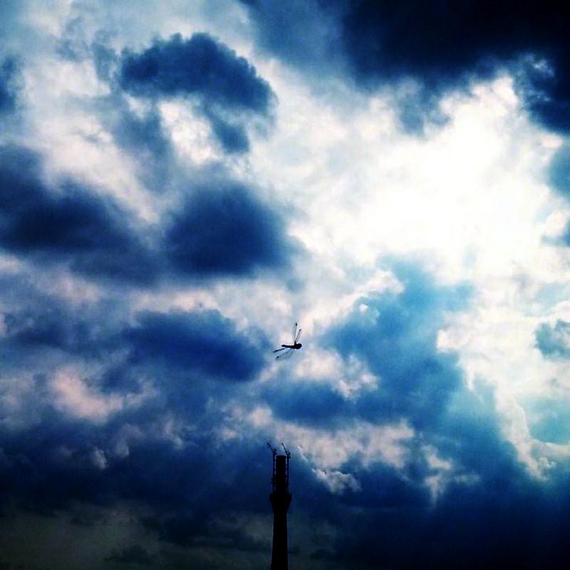 スカイツリー上空を旋回中の蜻蛉w