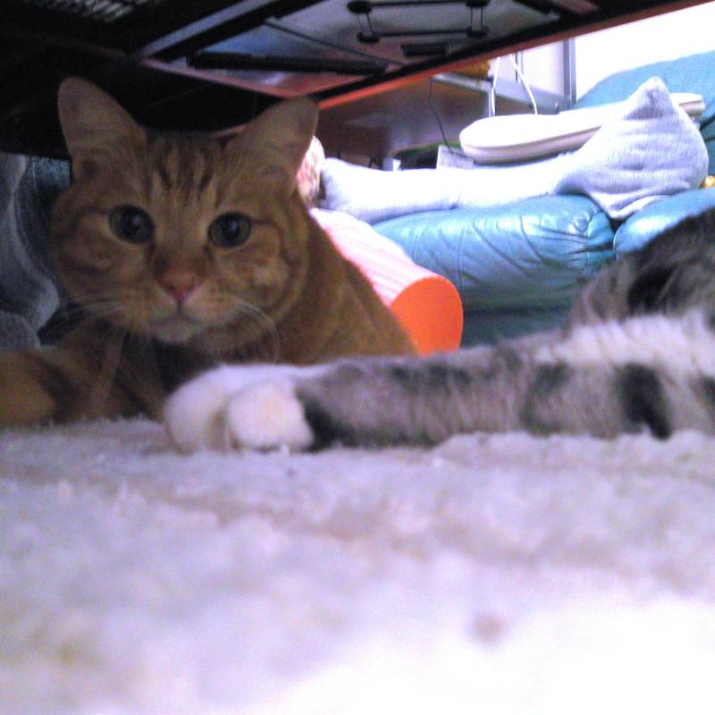テーブルの下で2