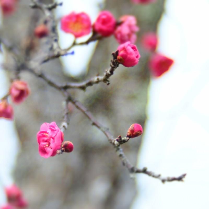 春のあし音
