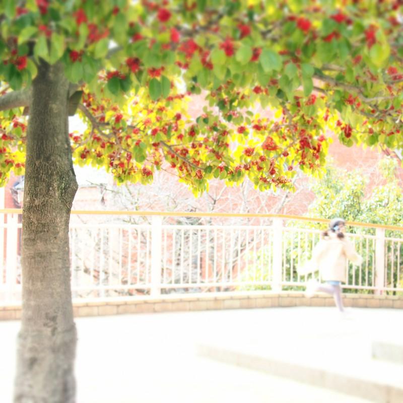 赤い実の木と女の子