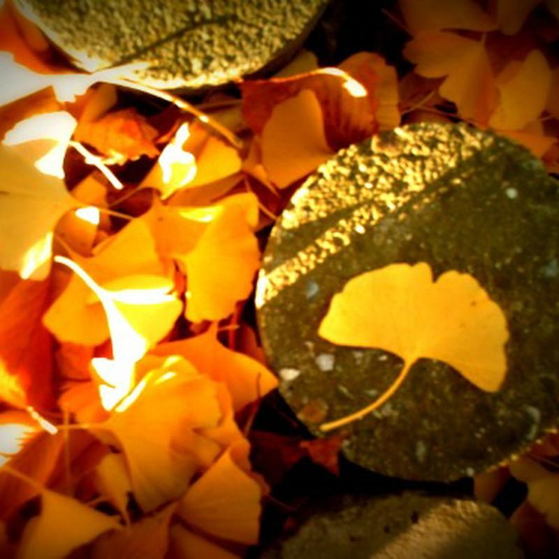 いちょうの葉っぱ。