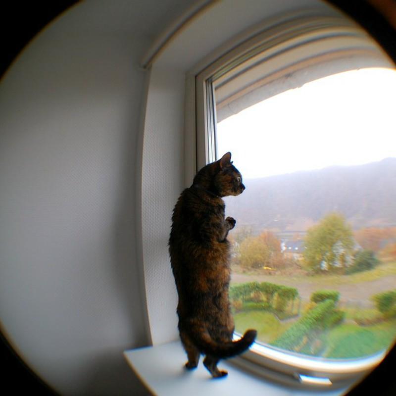 RE:短足ネコ
