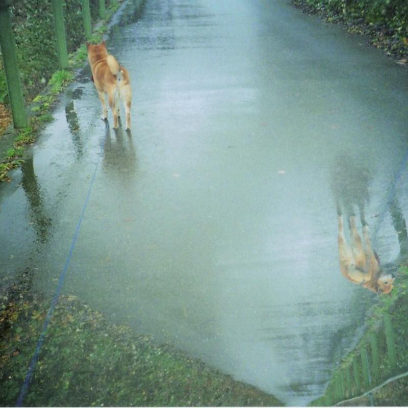 雨上がりのお散歩にて