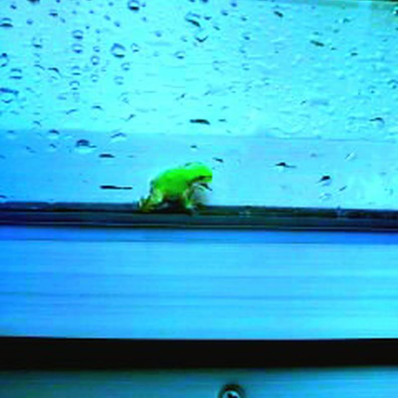 とある雨の日、