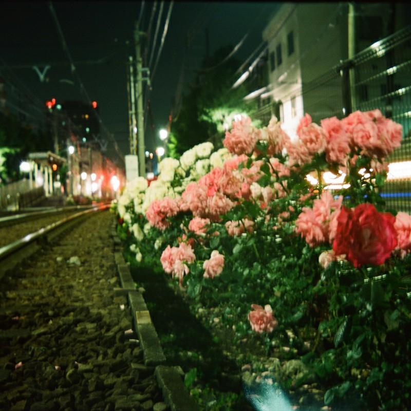 真夜中のばらと線路