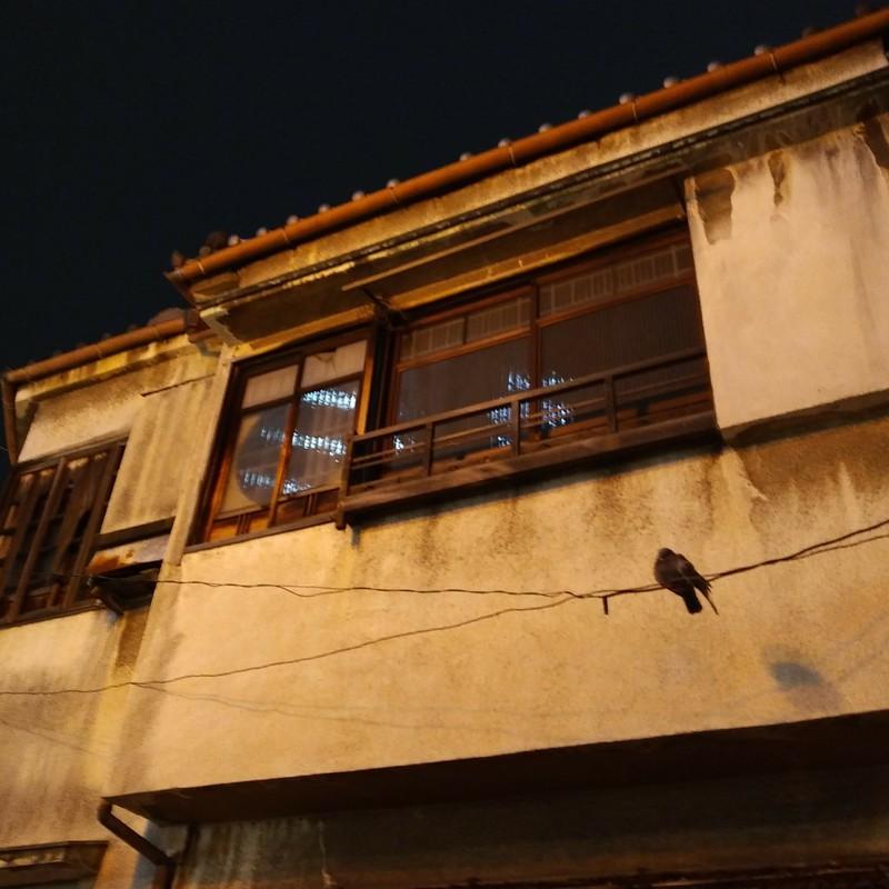 真夜中の鳩