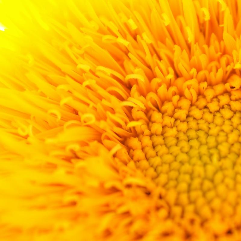 我が家の太陽