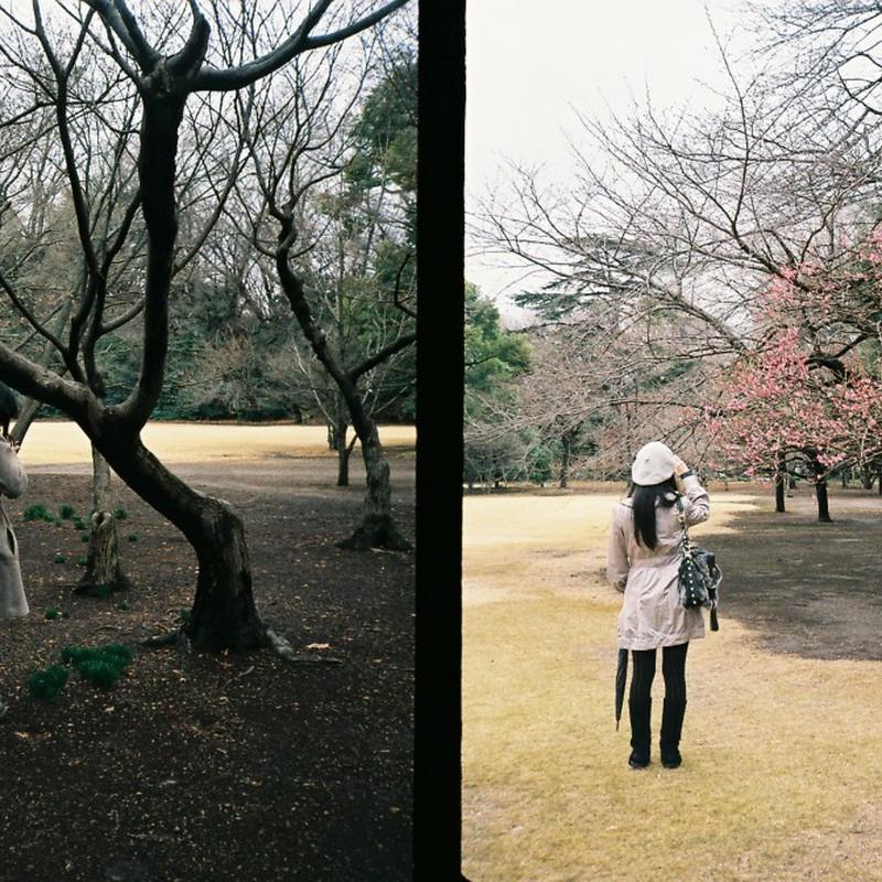 草を撮る人、梅を撮る人