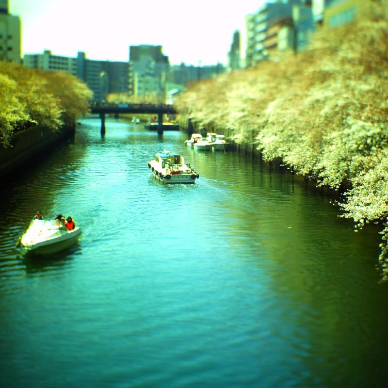 さくらの川