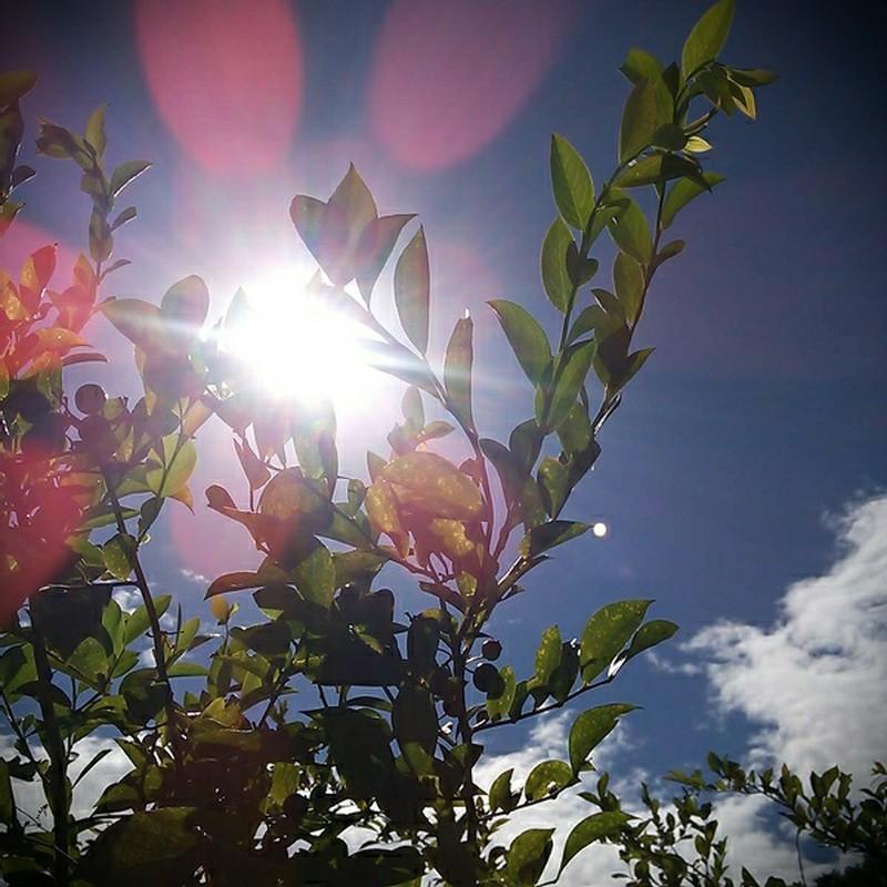 太陽の花!
