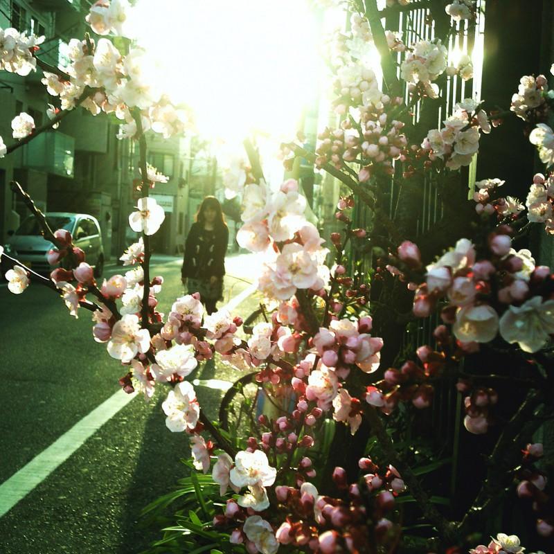 梅の咲く街角