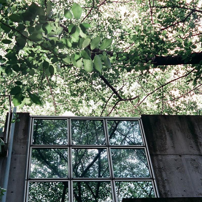 森を映す窓
