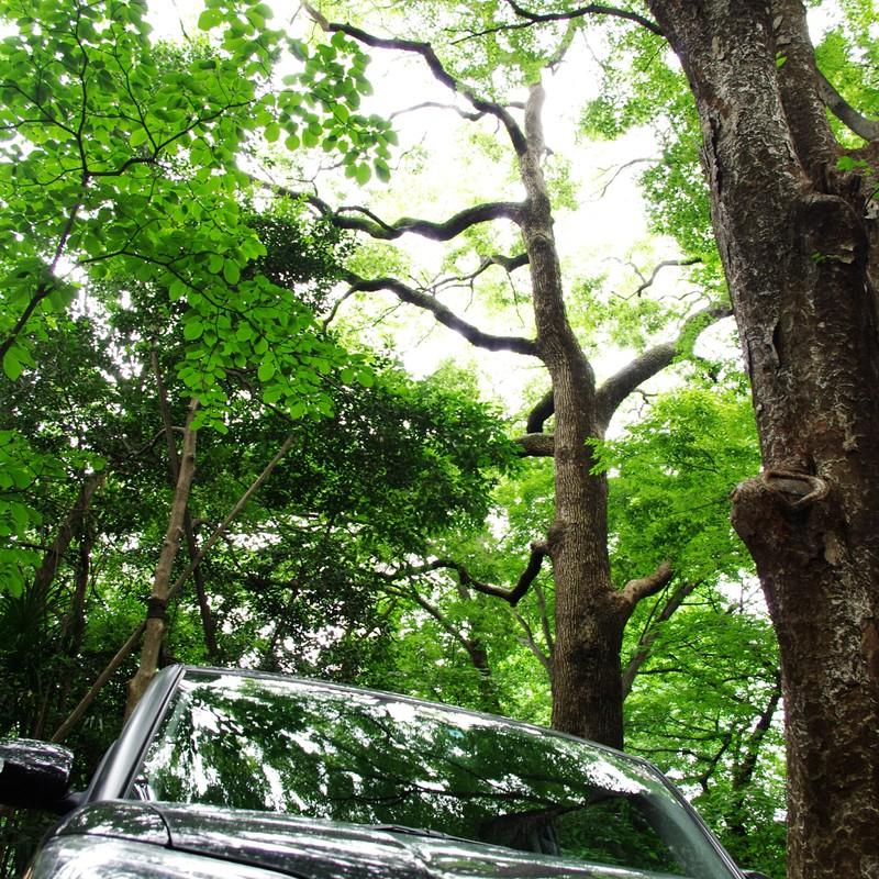 木漏れ日と自動車