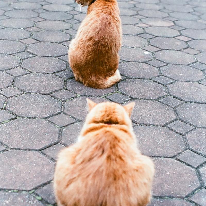 →カメラ→猫→猫→?