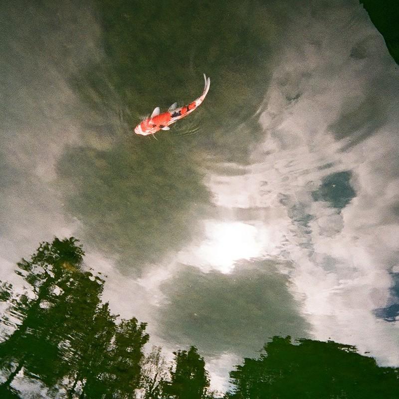 空を、泳ぐ