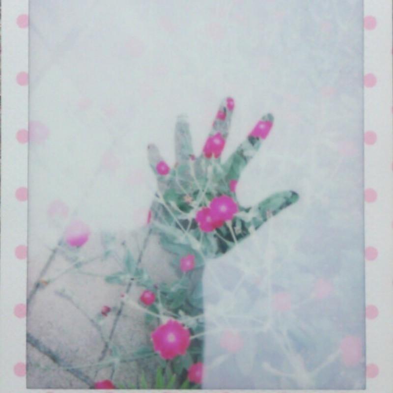花摘み(試し撮り1)