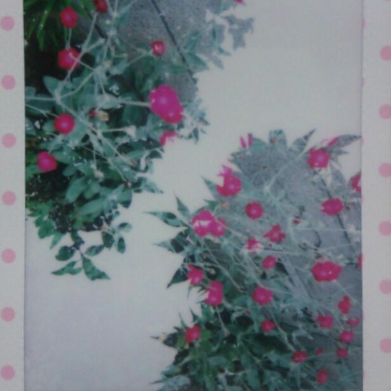葉の中に花(試し撮り3)