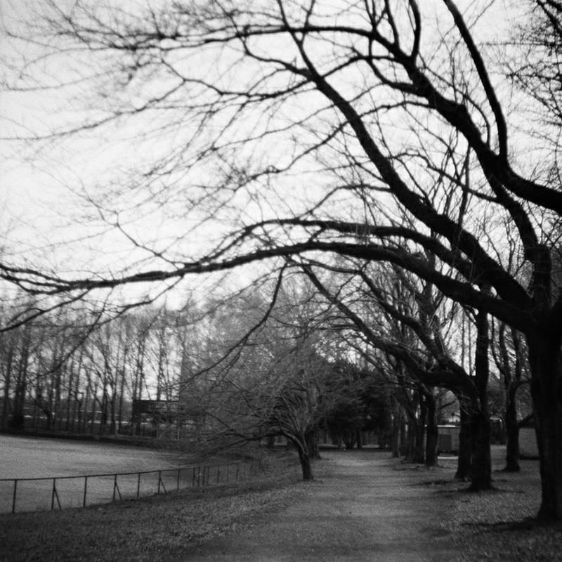 モノクロと枯れ木