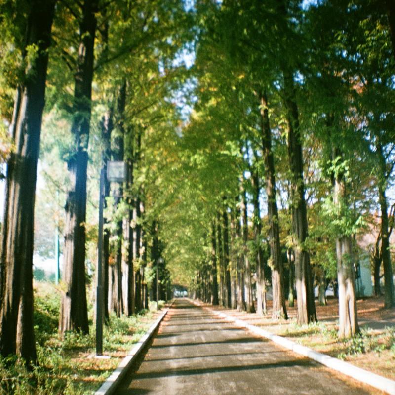 大学の小道