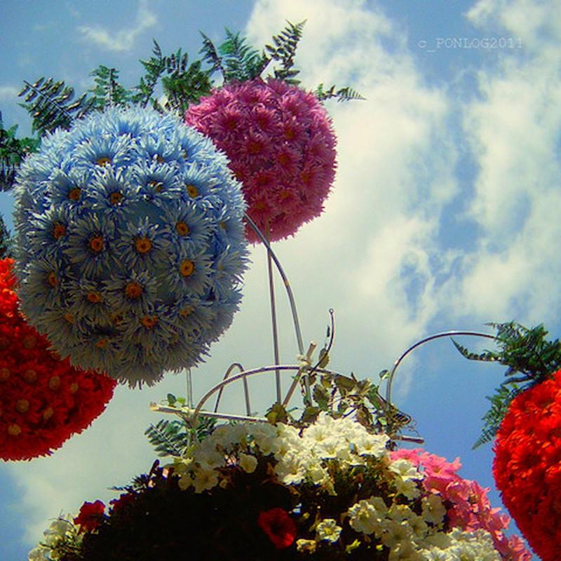 花球、大空へ。