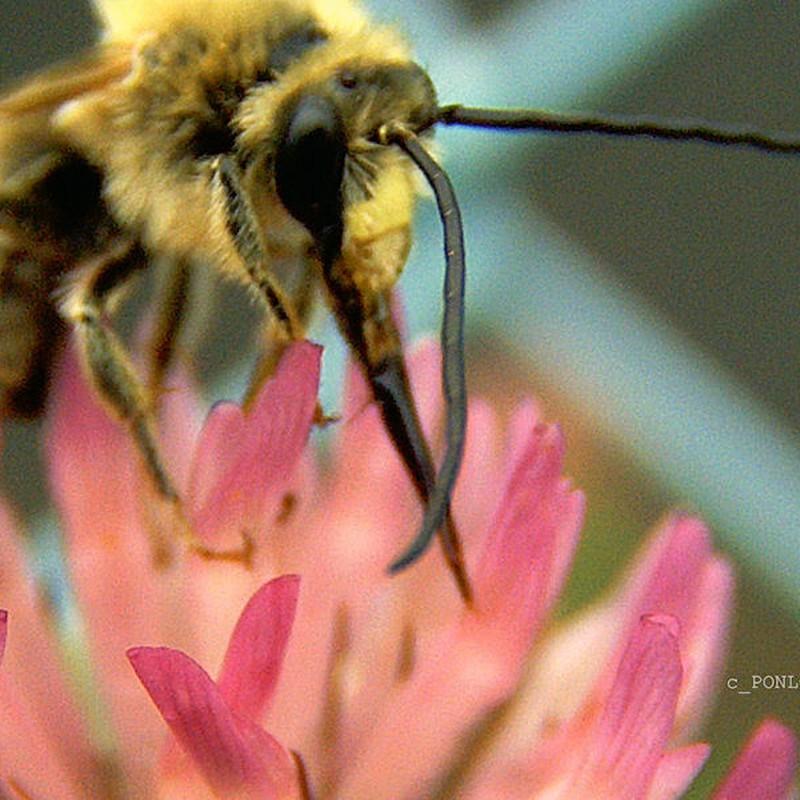 ミツバチ登場。