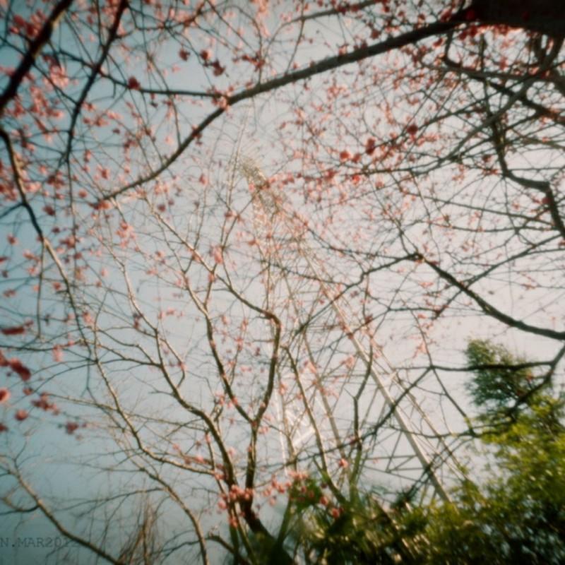 花霞に隠れる