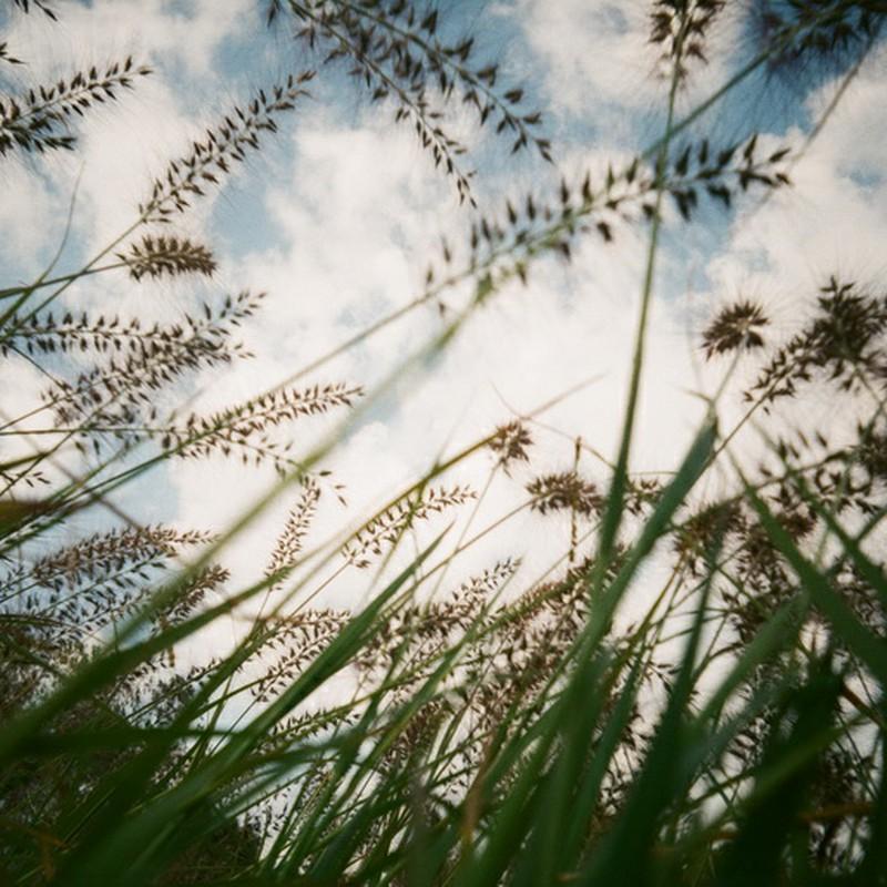 イネ科雑草の見た空