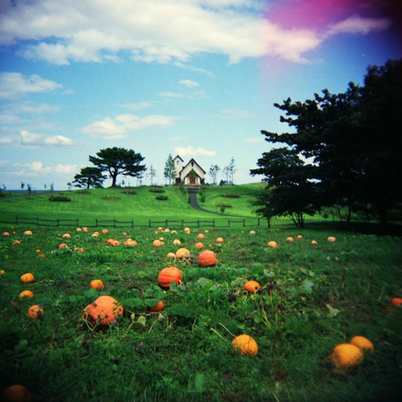 Pumpkins in Grass