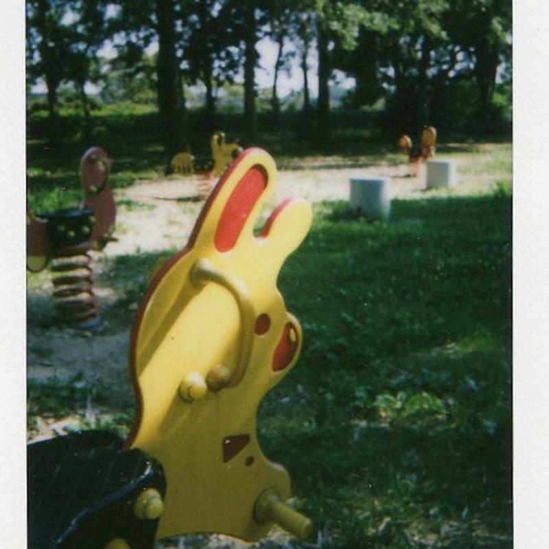 ウサギさんがいる森
