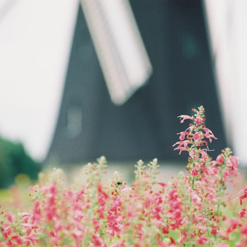 お花と風車