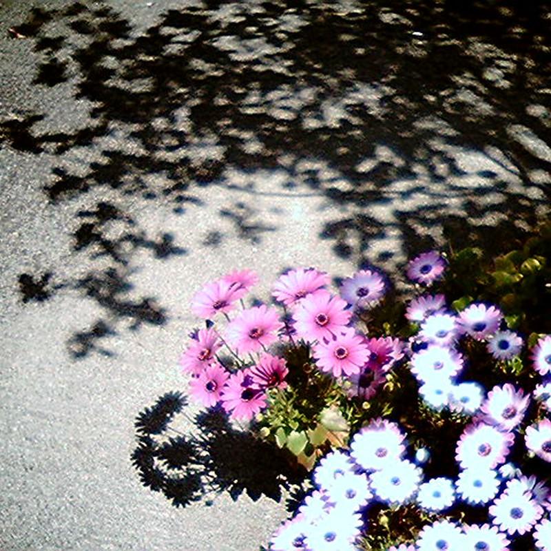 光と影とパープル