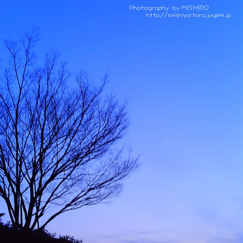 夕闇を迎える木