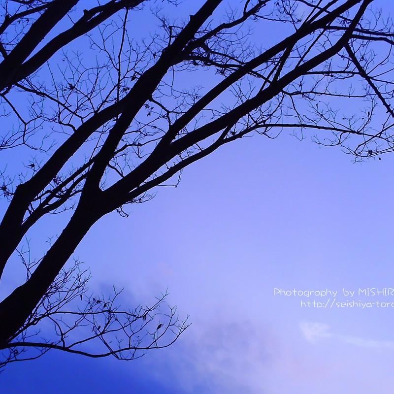 日没後の空と木
