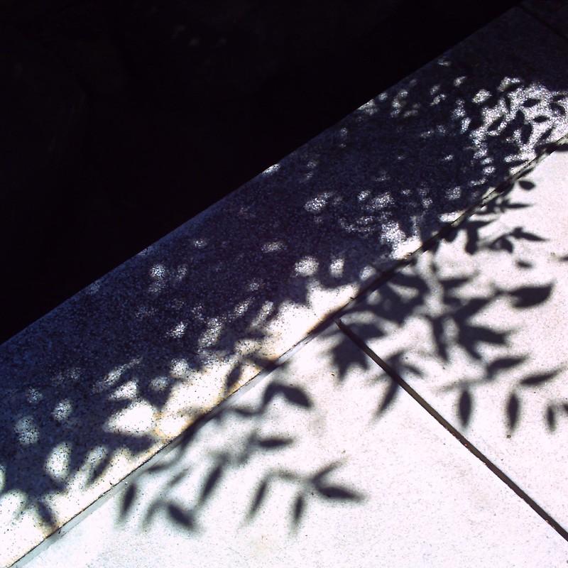 木漏れ日葉