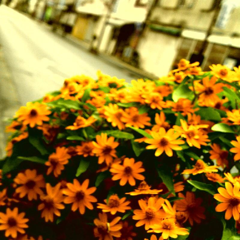 商店オレンジ