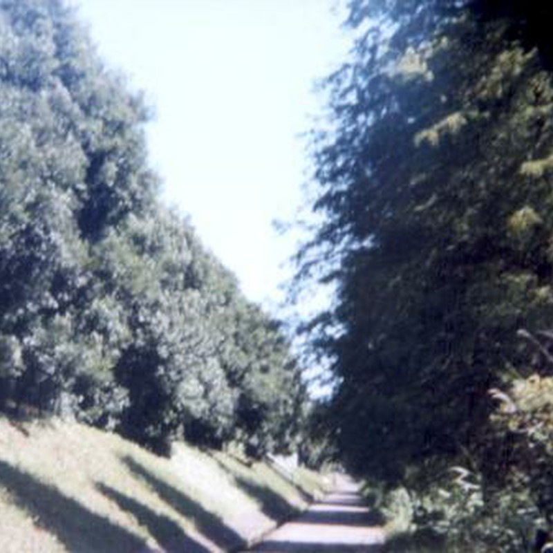 柏の葉公園遊歩道