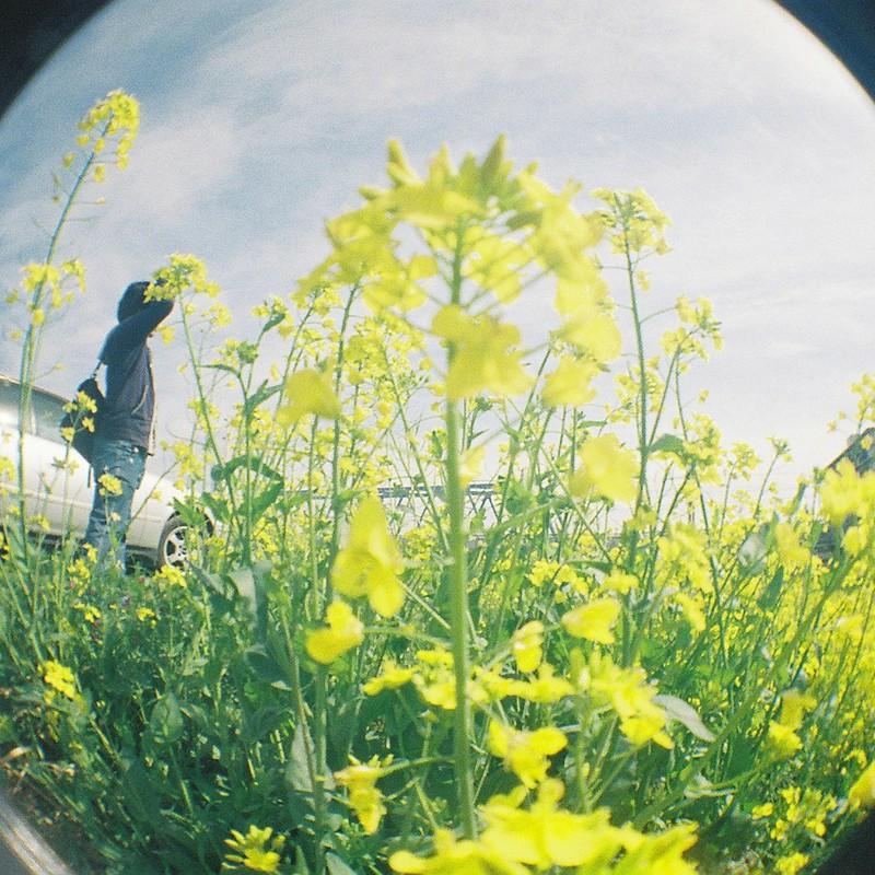 雀ちゃんと菜の花
