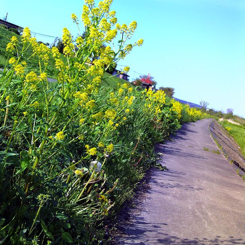 五郎と歩いた道