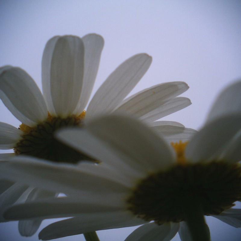 花弁おーばーらっぷ