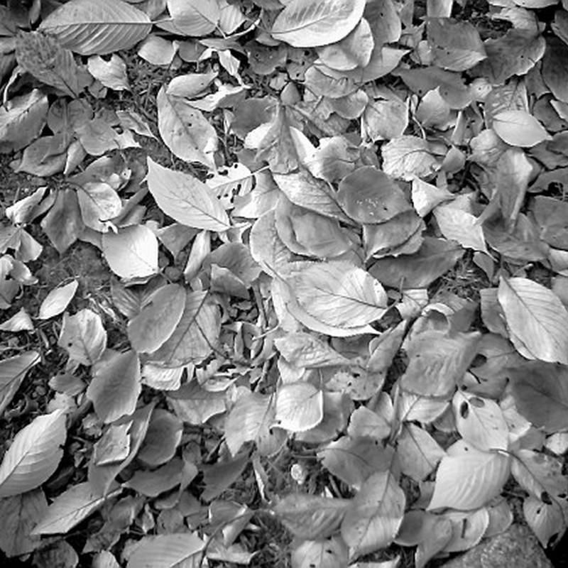落ち葉の敷布