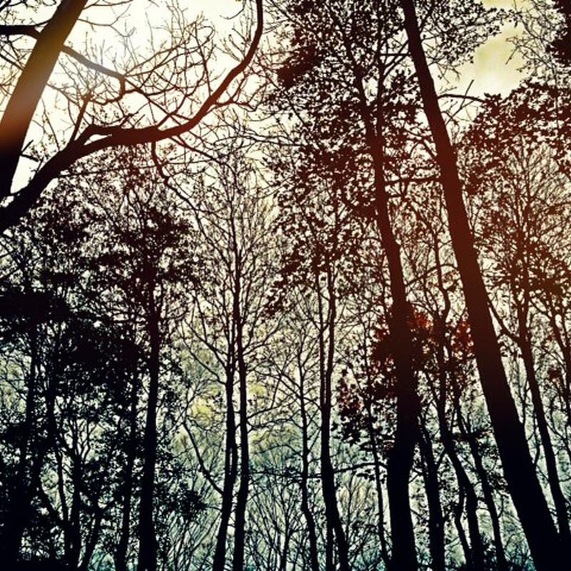 枯木も山の