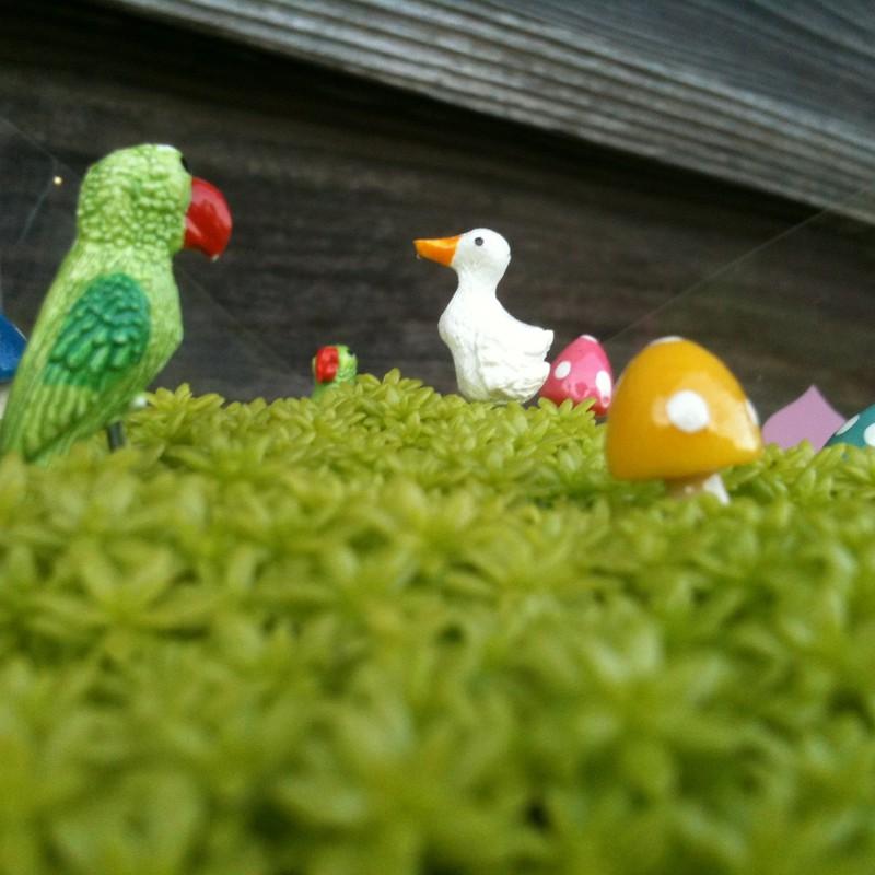 こんにちは鳥類