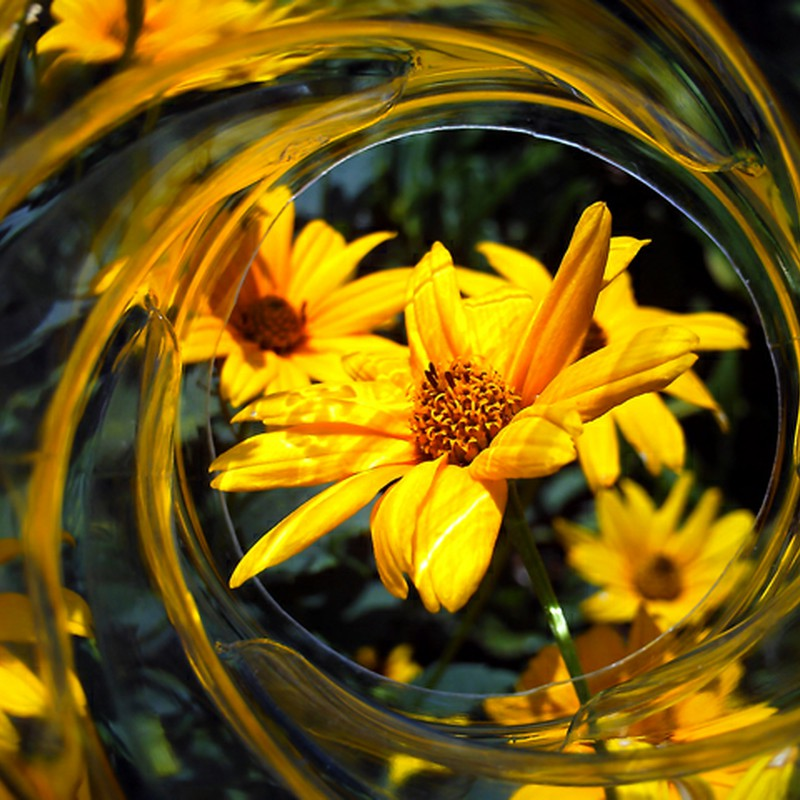Flower Stream