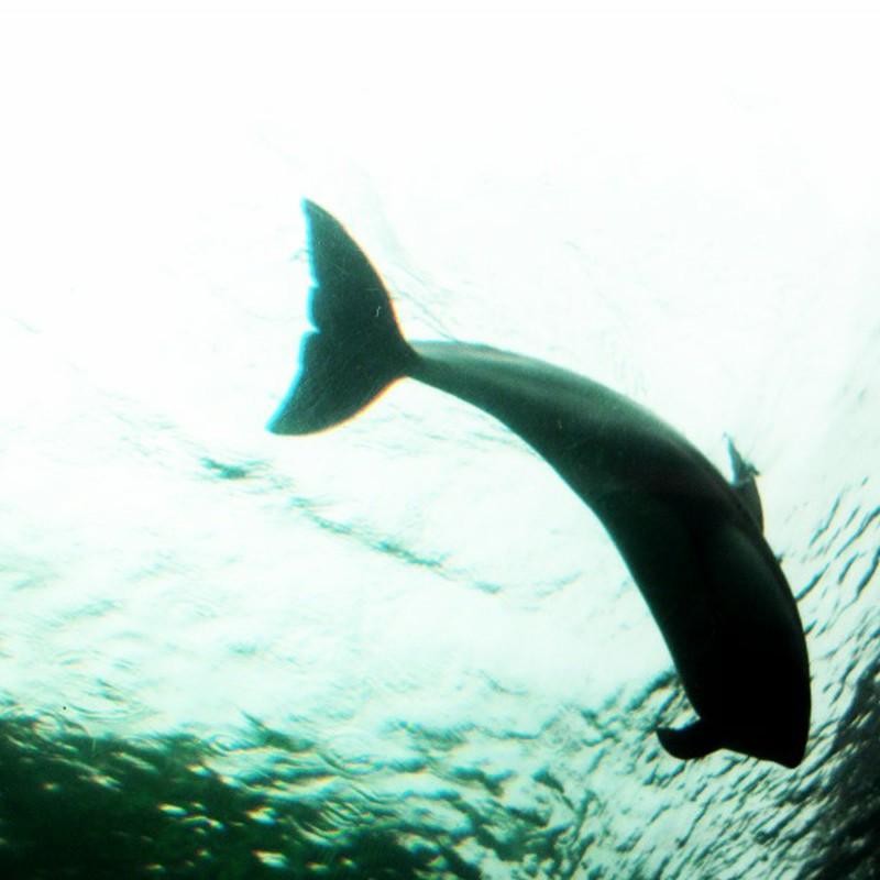 イルカを見上げる