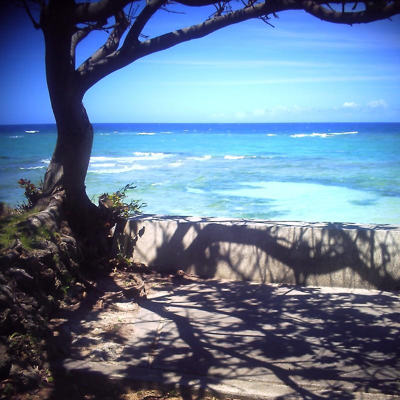 樹と海と影