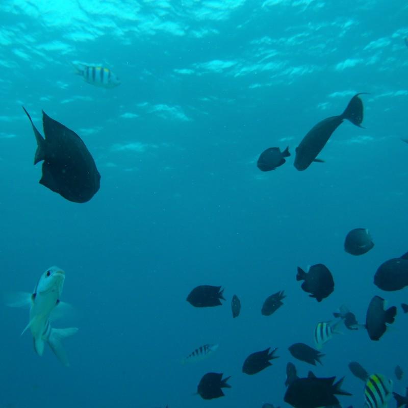 ボラカイの海